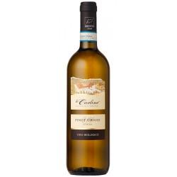 Italian white wine Pinot Grigio DOC Venezia BIO