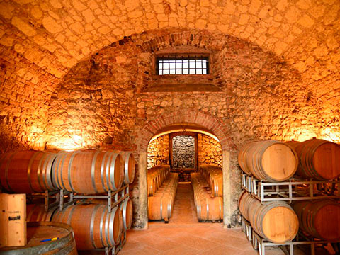 Cellar in Veneto region in Italy