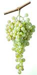 Nasco Grapes