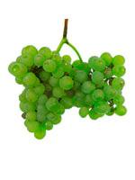 Grapes Fernao Pires