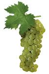 Moscato Grapes